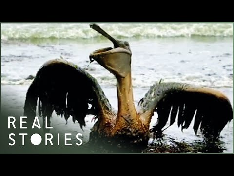 BP: $30 Billion Blowout (Investigative Documentary) | Real Stories