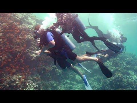 Подводное плавание Египет