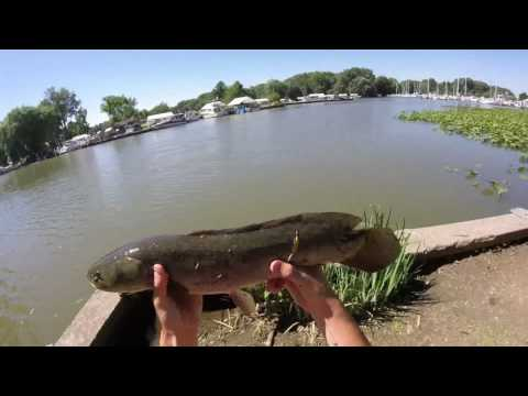 Multi-Species Fishing In Lake Erie With Nightcrawler