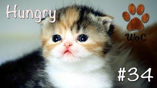 КОШКИ 2020 ПРИКОЛЫ С КОТАМИ Смешные Коты и Котики 2020 Funny Cats 34