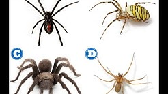 How to Identify Dangerous Spiders | HomeTeam Pest Defense