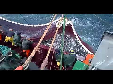 La pêche à la sardine au Maroc, Larache