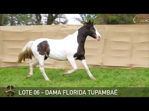 LOTE 06   DAMA FLORIDA TUPAMBAÉ