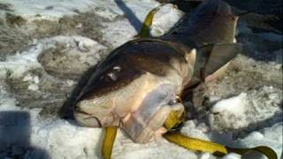 Sturgeon spearing season on Lake Winnebago, Fond du Lac Wiscosnin.