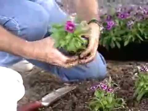 Flower Beds The Organic Way - Dirt Doctor, Howard Garrett