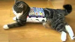 寵物王國   貓咪出不來的原因