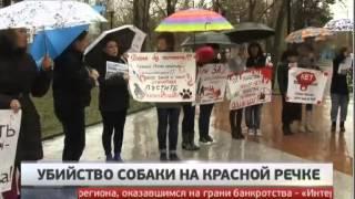 Подозреваемого в убийстве собаки мальчика избили. Новости. Gubernia TV