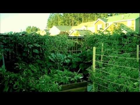 Rookie Organic Gardening – August 2012 Update