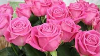 Эти розы-для Тебя