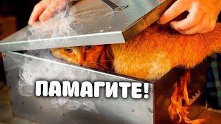Очень простой дачный рецепт сочного и вкусного мяса свежепойманной щуки