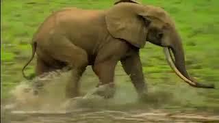 фильм документальный 2018 Дикий мир животных  Природа Африки  Документальный фильм   360 X 640