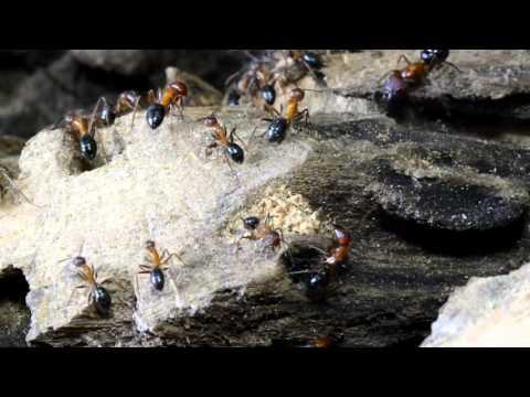 How Epigenetics Can Affect Ants' Behavior
