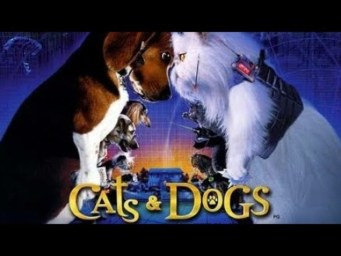 Cats And Dogs In Tamil Youtube