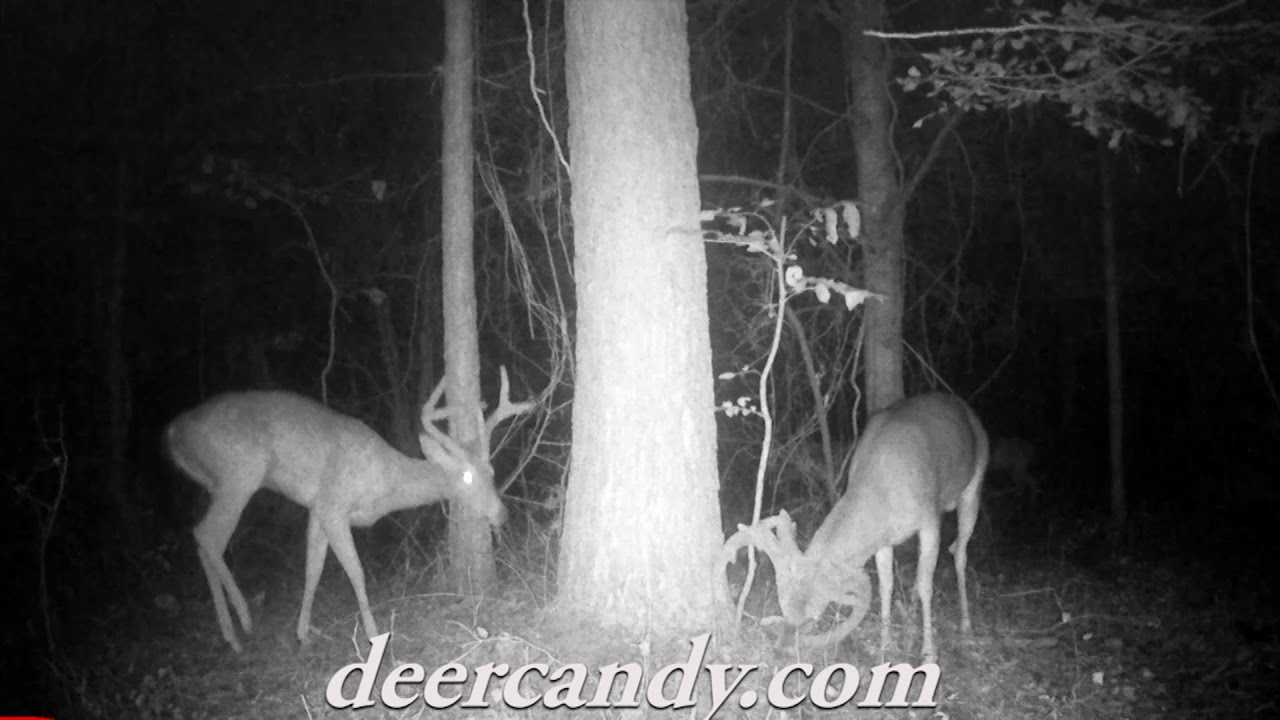 Deer Candy Just 1lb Application - Elusive Whitetails