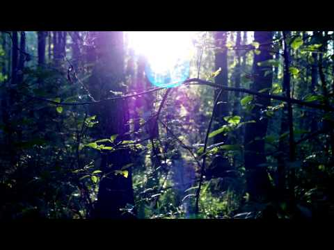 Relaxing Nature sounds: 4 Hour - In Swedish Forest