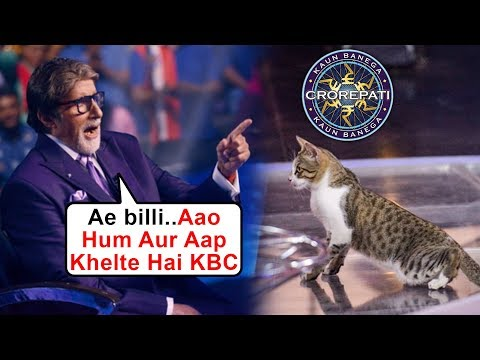 Baby Cat On Kaun Banega Crorepati 11 Set, Amitabh Bachchan's FUNNY REACTION Mp3