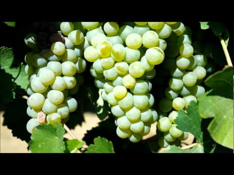 Fanagoria winery, Russia