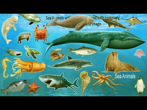 Sea Animals Name with Meaning & Pictures | Sea Animals Vocabulary