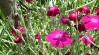 Blumenwalzer.wmv