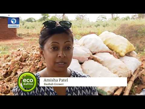 Eco@Africa: Focus On Waste From Farming Harvest