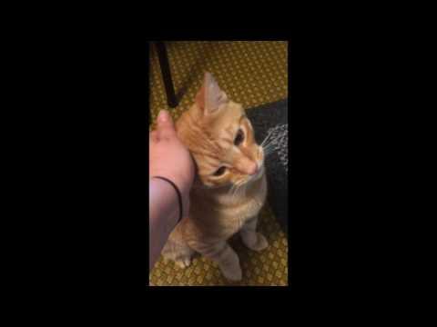 Singing to my cat