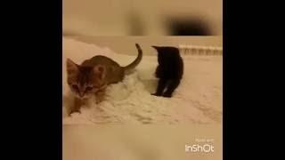 Массаж от котят