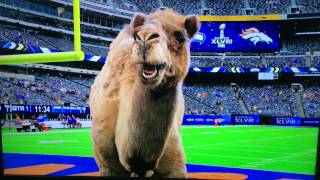 2014 Super Bowl Game Day (Hump Day)