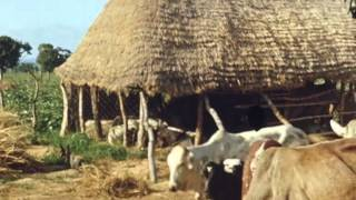 Sleeping sickness reclamation in West Africa, the Anchau settlement (nd)