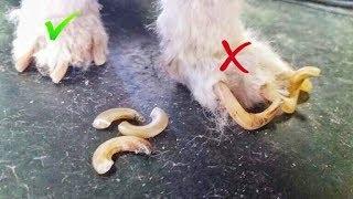 Как подстричь когти собаке / Что делать если она не даётся