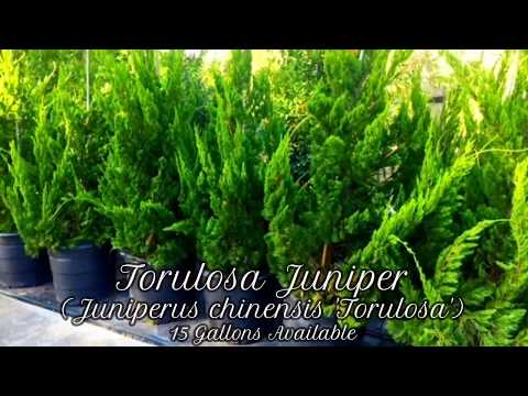 Trees we sell || Nature Scapes: Garden Center & Landscaping