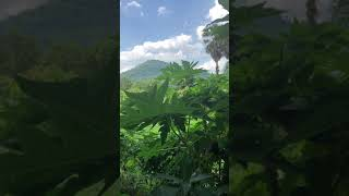Traditional Cambodian Music, Calming Khmer Song & Relaxing Kep Mountain View