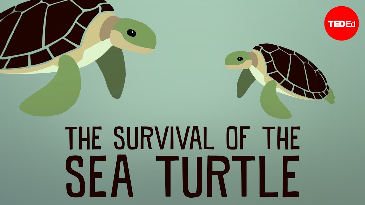 sea turtle evolution