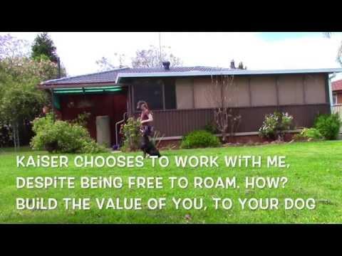Doberman Pinscher off leash obedience training | Easy dog training tips