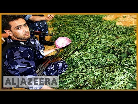 🇵🇸 Illegal cannabis production in West Bank rises as economy tanks | Al Jazeera English