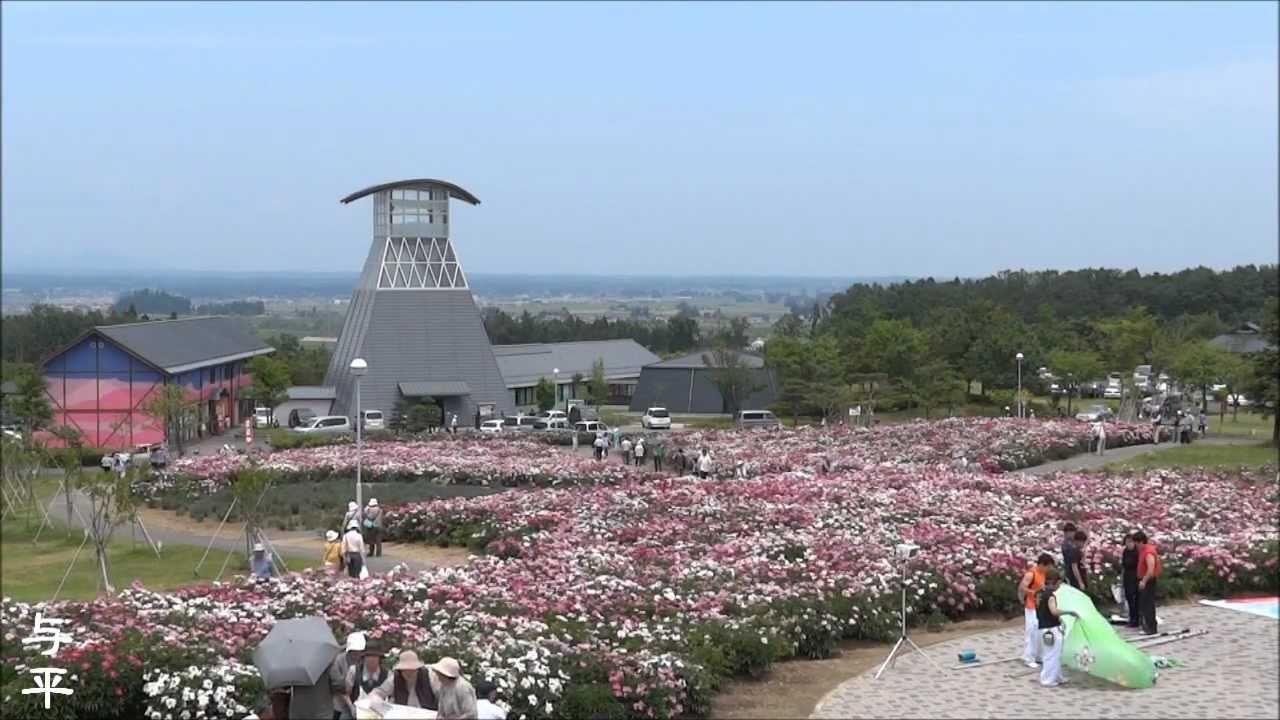 色麻町のシャクヤク (宮城県・色麻町) - YouTube
