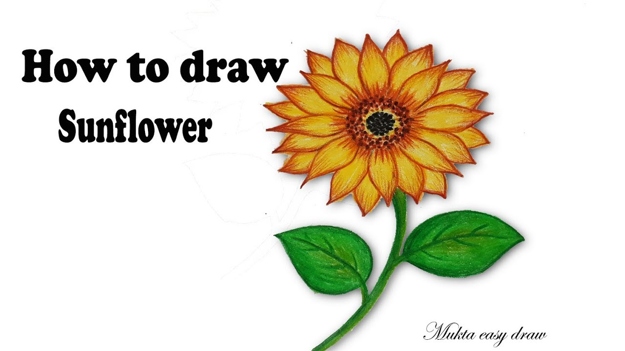 How to draw Sunflower.Step by step (very easy) - YouTube