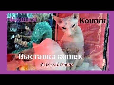 Выставка кошек Cat show