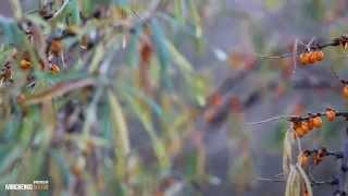 Смотреть видео Достопримечательности города Днепропетровск
