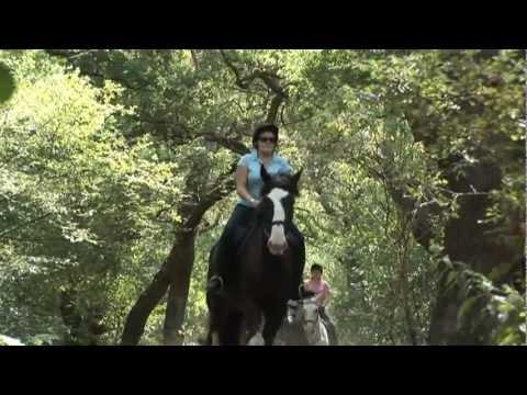 Horse Riding London at Wimbledon Village Stables