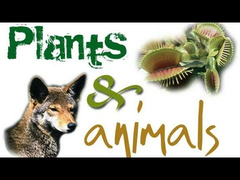 Importance of Plants and Animals | Flora and Fauna
