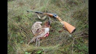 Охота на фазана 2018.