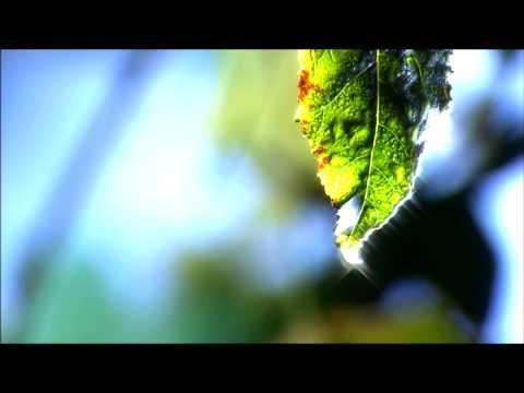 Dew on Leaf (Ryan Graves & R2Media)