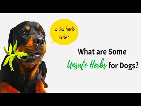 11 HERBS And SPICES Which Are Excellent For Your DOG's HEALTH