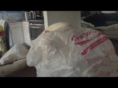 Cat Runs With a Plastic Bag