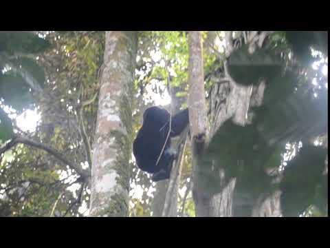 Gorilla Trekking In Rwanda with Swanair Travel & Safaris