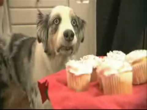 Dramatic Cupcake Dog Youtube
