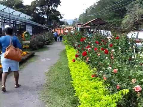 Jardines de boqueron chiriqui panama youtube for Decoracion de jardines en panama
