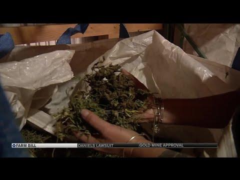 $827B Farm Bill passes Senate, paving way for fully-legal industrial hemp production