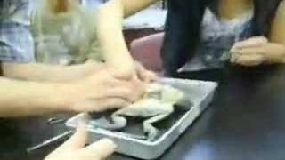 disecting frogs