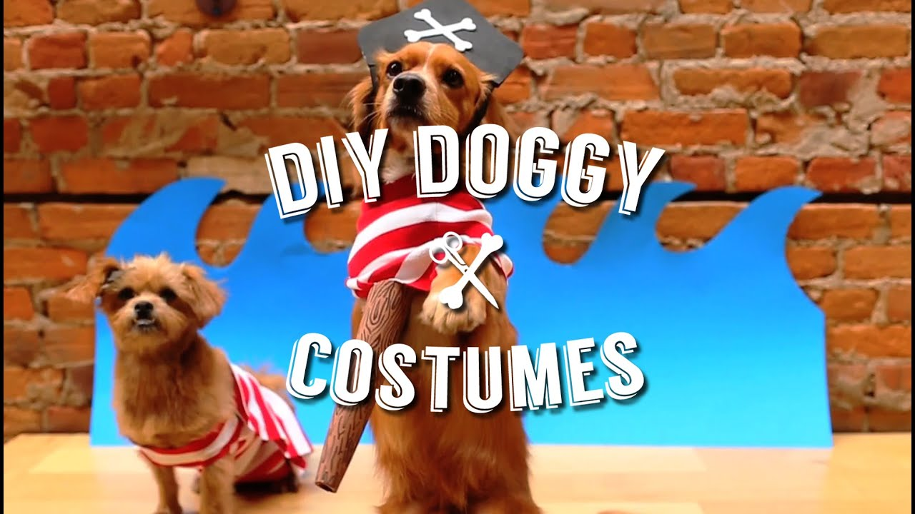 Easy diy halloween costumes for your pet dog youtube solutioingenieria Images